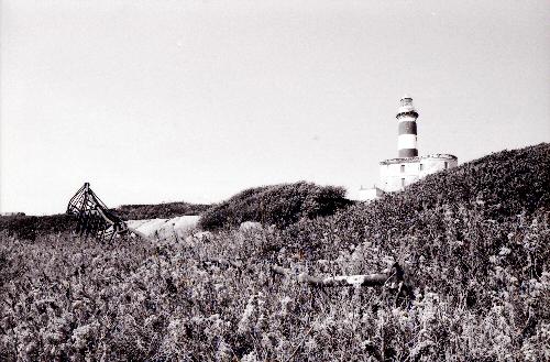 Isola dei Cavoli 5